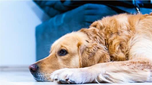 Un perro espera a su dueño a la salida de una cárcel | EL FRENTE