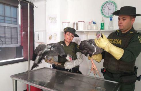 Policía ambiental rescata aves en peligro de extinción   EL FRENTE