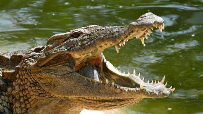 Se salvó de ser devorado por un cocodrilo   Noticias   Mundo   EL FRENTE