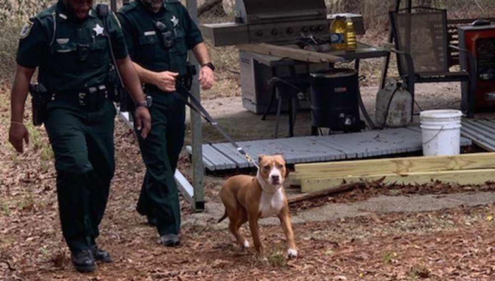 Perro Pitbull cuidó a un niño de 3 años perdido en el bosque | foto | EL FRENTE